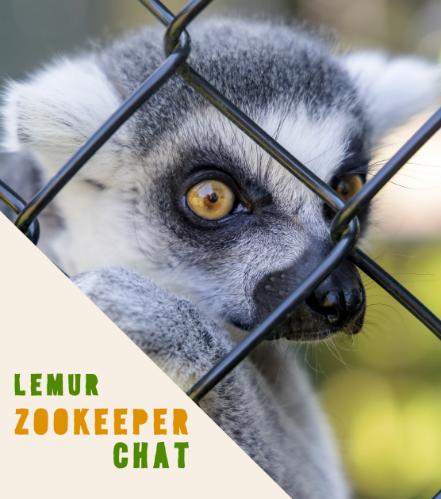 Lemur Chat