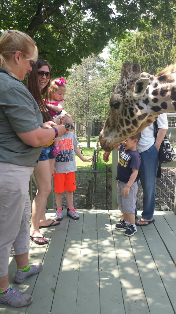 The Long Island Game Farm – Wildlife Park & Children's Zoo Unveils New Giraffe Encounter