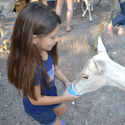 Visit The Long Island Game Farm For Your Next Field Trip