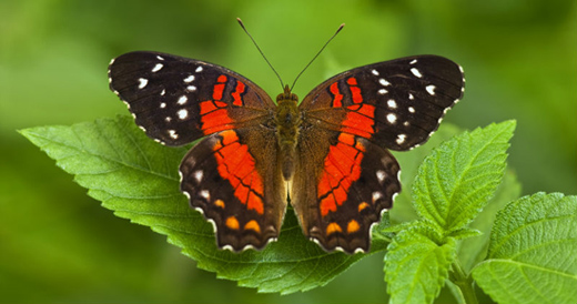 Long Island Game Farm Invites Young Girls from The Butterfly Effect Project for a Special Day