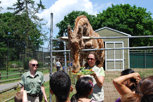 Long Island Game Farm Staff and Visitors Gather to Celebrate Clifford the Giraffe's Seventh Birthday!
