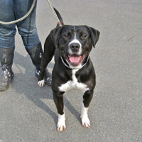 Long Island Game Farm Hosts Dogs Ready to be Adopted from Brookhaven Animal Shelter & Adoption Center