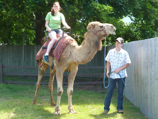 Come Take Clyde for a Ride! Long Island Game Farm's Camel Ride is Now Open