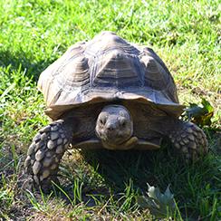 Long Island Game Farm tortoise
