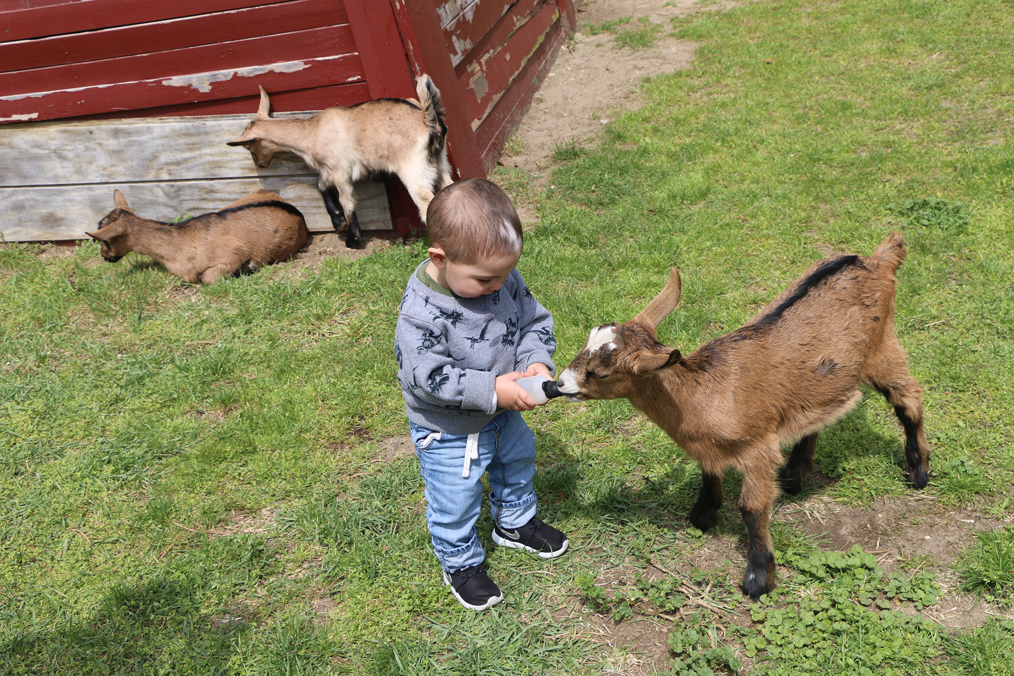 Adventure Is Closing In Long Island Game Farm Wildlife Park Amp Children S Zoo Announces Spring 2018 Schedule And Opening Day Long Island