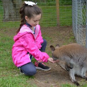 meet a wallaby