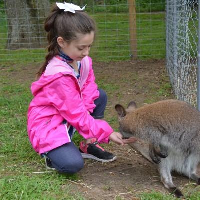 meet a wallaby