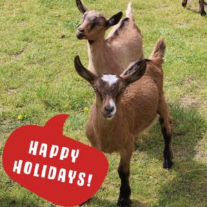 goats happy holidays