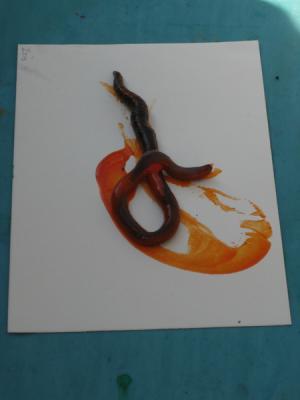 worm-on-orange-paint